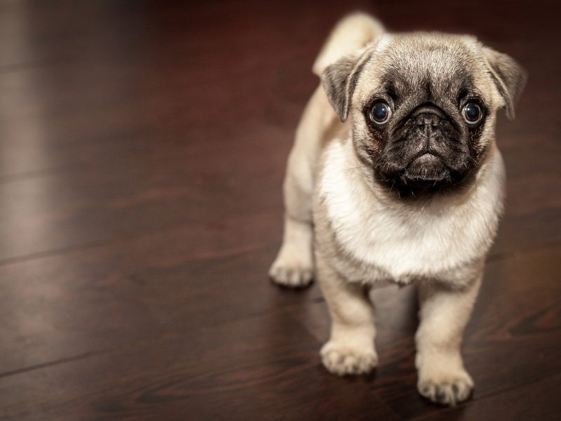 Dog Care 101 - What you must know